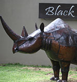 Black Rhino Game Reserve